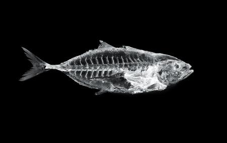39782948 - fish x ray